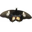 Papilio Heraclides Isidorus Tingo (F)
